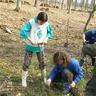 06 - Páronként 70 darab csemetét ültettek a gyerekek.jpg