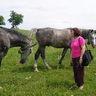 19 - A bátrabbak összeismerkedtek a szabadon tartott lovakkal is.jpg