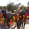 12 - A helyi fogatosok is szívesen vettek részt a falu hagyományait ápoló rendezvényen.jpg